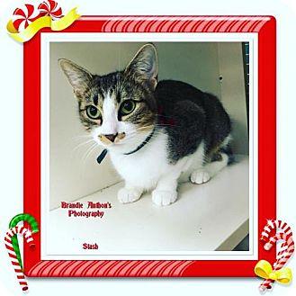 Domestic Mediumhair Cat for adoption in ROSENBERG, Texas - Stash