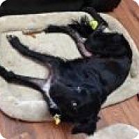 Adopt A Pet :: Valley - Denver, CO