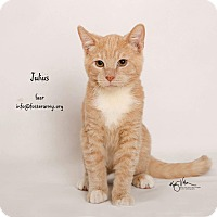 Adopt A Pet :: Julius - Riverside, CA