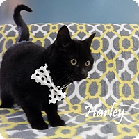 Adopt A Pet :: Harley - Bucyrus, OH