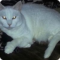 Adopt A Pet :: Beemer - Pasadena, CA