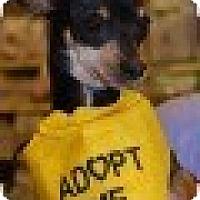 Adopt A Pet :: Fred - Sugar Land, TX