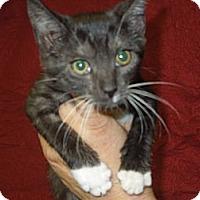 Adopt A Pet :: Purr - Medina, OH