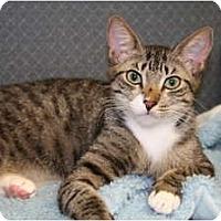 Adopt A Pet :: Alt Tab - Bonita Springs, FL
