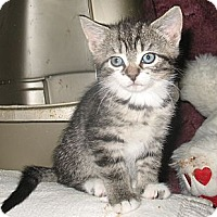 Adopt A Pet :: Lora - Acme, PA