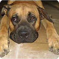 Adopt A Pet :: Branson - Scottsdale, AZ