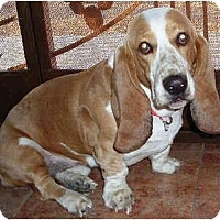 Adopt A Pet :: Tristan - Phoenix, AZ
