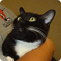 Adopt A Pet :: Velvet - Cerritos, CA