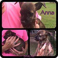 Adopt A Pet :: Anna - El Campo, TX