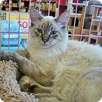 Adopt A Pet :: Takashi D - Sacramento, CA