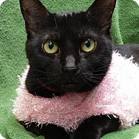 Adopt A Pet :: Maggie - Tinton Falls, NJ
