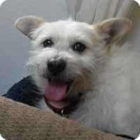 Adopt A Pet :: Crouton - Adoption Pending - Gig Harbor, WA