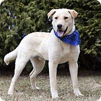 Adopt A Pet :: JASPER - Ile-Perrot, QC