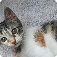 Adopt A Pet :: Lucy - Summerville, SC