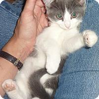 Adopt A Pet :: Calliope - Stanford, CA
