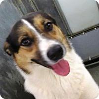 Adopt A Pet :: Ron White - Lincolnton, NC