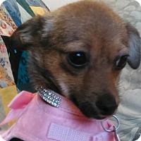 Adopt A Pet :: Foxy - San Diego, CA