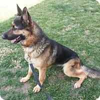 Adopt A Pet :: Avery - Downey, CA
