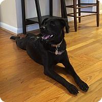 Adopt A Pet :: Jazzy (Jasmine Star) - PORTLAND, ME