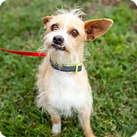 Adopt A Pet :: Feldman - San Diego, CA