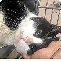 Adopt A Pet :: Tuna - Springdale, AR