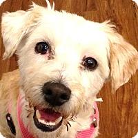 Adopt A Pet :: Dixie-ADOPTION PENDING - Boulder, CO