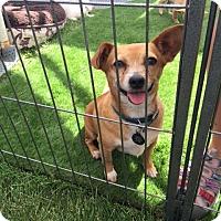 Adopt A Pet :: Sammy - Vacaville, CA