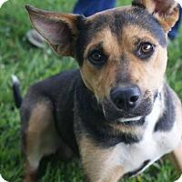 Adopt A Pet :: Wyatt - Adoption Pending - Potomac, MD