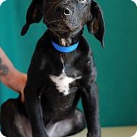 Adopt A Pet :: Leo - Waldorf, MD