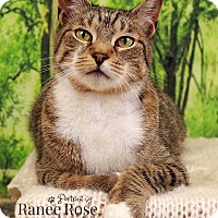 Adopt A Pet :: Handsome - Sterling Heights, MI