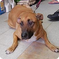Adopt A Pet :: Rita - Brooklyn, NY