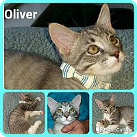 Adopt A Pet :: Oliver - Arlington/Ft Worth, TX