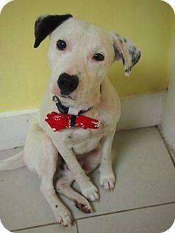 Retriever (Unknown Type) Mix Dog for adoption in Philadelphia, Pennsylvania - Doodle