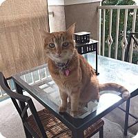 Adopt A Pet :: KOBI - Brea, CA