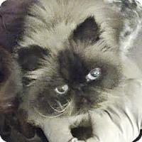 Adopt A Pet :: Himi - Davis, CA