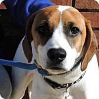 Adopt A Pet :: Bailey - Berkeley Heights, NJ