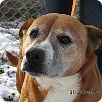 Adopt A Pet :: Buck - Germantown, MD