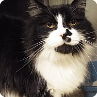 Adopt A Pet :: Izzy - Grants Pass, OR