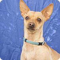 Adopt A Pet :: Danny - Tucson, AZ