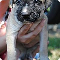Adopt A Pet :: Gnarley - Orlando, FL