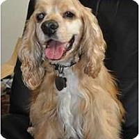 Adopt A Pet :: Joey - Sugarland, TX