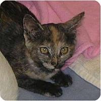 Adopt A Pet :: Ambretta - Brea, CA