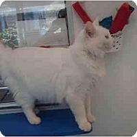 Adopt A Pet :: Pepe - El Cajon, CA
