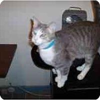 Adopt A Pet :: Mario - Hamburg, NY