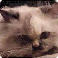 Adopt A Pet :: Crissy - Davis, CA