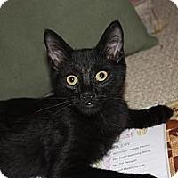 Adopt A Pet :: Dodger (LE) - Little Falls, NJ