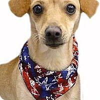 Adopt A Pet :: Peanut super easy - Sacramento, CA