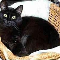 Adopt A Pet :: Lunar - Alexandria, VA