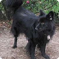 Adopt A Pet :: Sophia - Charlottesville, VA