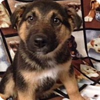 Adopt A Pet :: Junior - Saskatoon, SK